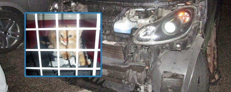 """© Um die Katze zu befreien, musste der Smart aufwändig """"zerlegt"""" werden - Foto: Polizei"""