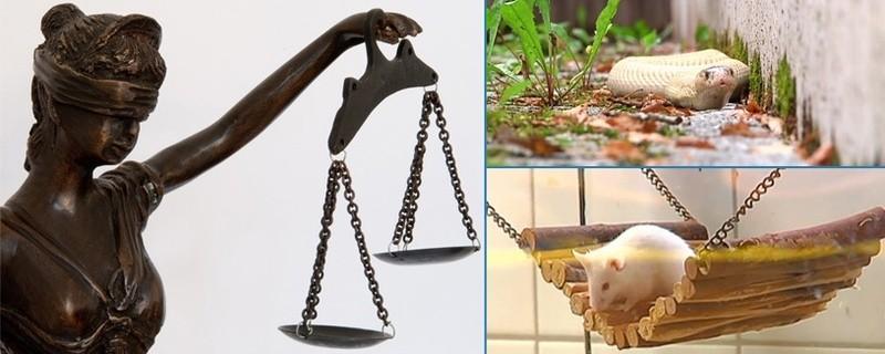 Maus, Schlange, Justizia, © Symbolfoto