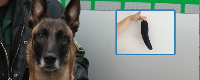Polizeihund, Suchhund, Spürhund, Socke, Geruch, Tatort, © Der Ermittler mit der Super-Nase