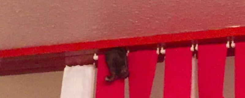 Fledermaus Germering Polzei , © Polizei fängt Fledermaus ein