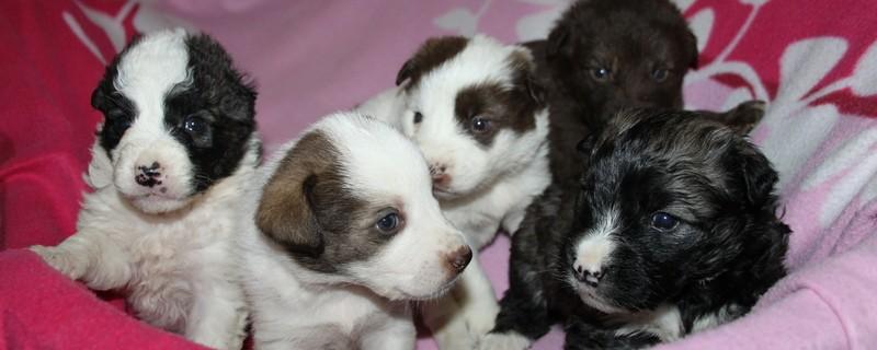 Kleinrassige Hunde