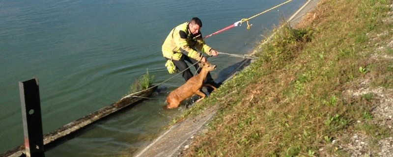 Reh aus der Isar gerettet, © Foto: Polizei