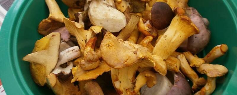 Pilze und Schwammerl in einem Korb