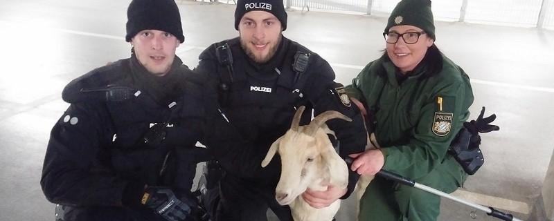 © Beamte mit der entlaufenen Ziege. Foto: Polizei München