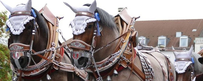 Das Pferdegespann einer Münchner Brauerei, © Symbolfoto