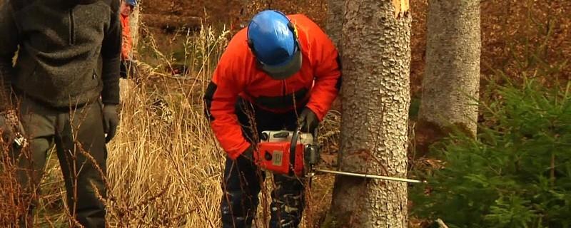 Holzfäll-Trainingseinheit der technischen Einsatzeinheit der Bereitschaftspolizei