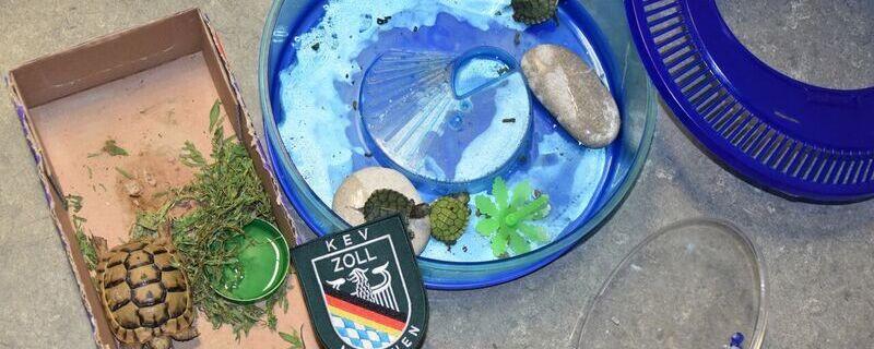 Die vom Zoll entdeckten Schildkröten in der Obhut der Auffangstation für Reptilien., © Die vom Zoll entdeckten Schildkröten in der Obhut der Auffangstation für Reptilien. Foto: Zoll