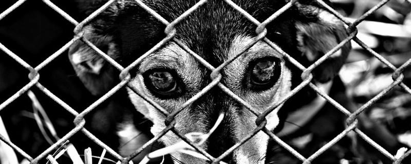 Armer Hund hinter einem Zaun, © Symbolfoto