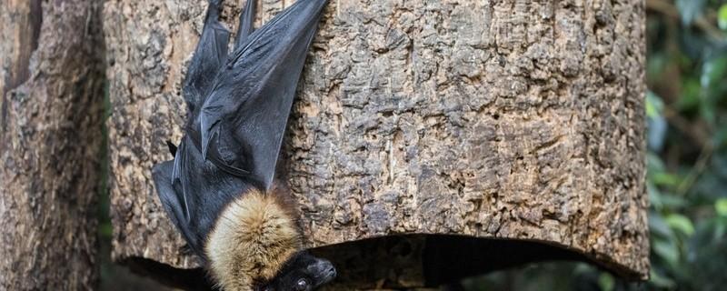 Fledermaus im Tierpark Hellabrunn