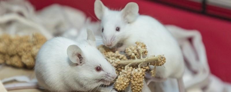 Viele der beschlagnahmten Mäuse warten nun im Tierheim auf eine Vermittlung., © Deutscher Tierschutzbund e.V. / M. Marten