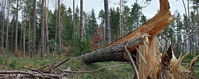 Umgeknickter Baum nach einem Sturm, © Symbolfoto