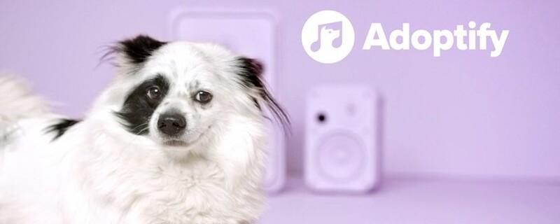 adoptify hunde per musikgeschmack finden