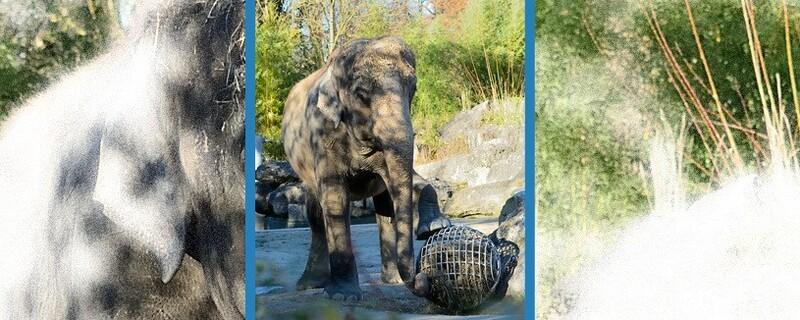 © Foto: Tierpark Hellabrunn / Marisa Segadelli