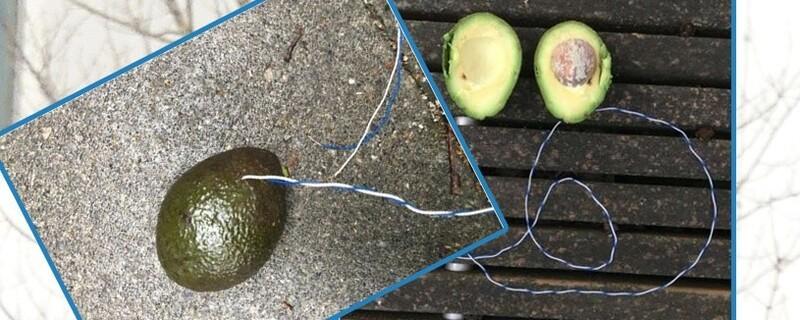 Die verdächtige Avocado mit dem Draht, © Fotos: Polizei
