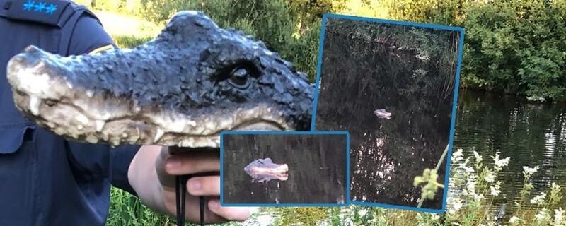 Krokodil-Attrappe im Tautinger Weiher, © Fotos: Polizei