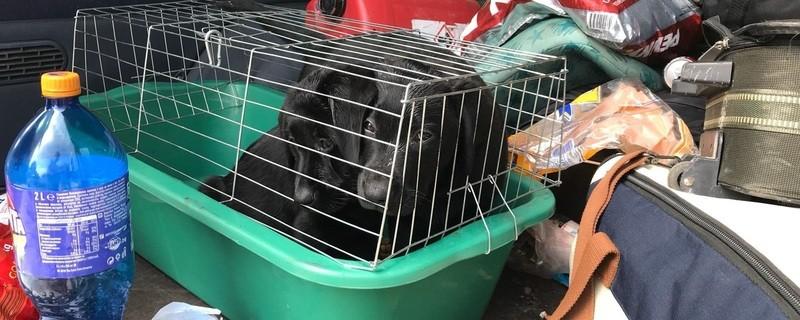 Der Zoll hat zwei Hundewelpen in einem bulgarischen Kleintransporter entdeckt, © Foto: Zoll