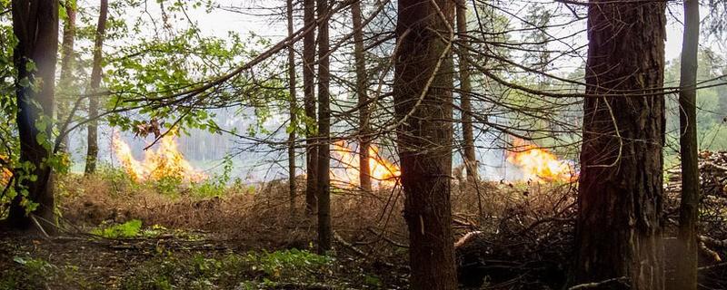 Waldbrand , © Symbolfoto