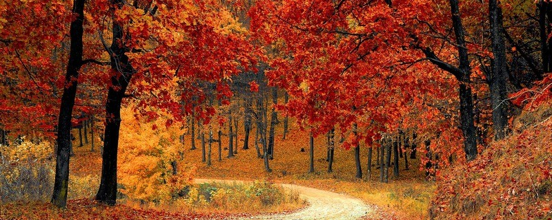 Acht Gründe, um sich auf den Herbst zu freuen