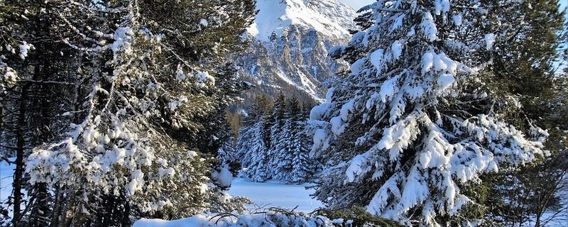 Winterwald, © Symbolbild