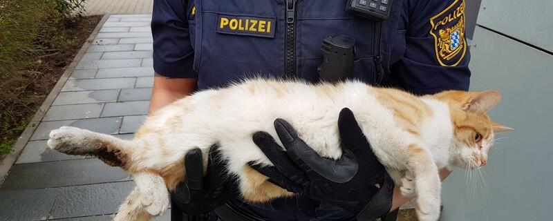 verletzte Katze von der A8