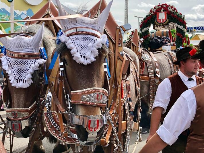 Einzug der Wiesnwirte Kutscher mit Pferden