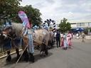 Die Pferde vom Hofbräu schön geschmückt, © Die Pferde vom Hofbräu schön geschmückt