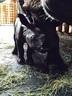 Nashorn Baby, © Der Panzernashorn-Nachwuchs ist da. Foto: Tierpark Hellabrunn