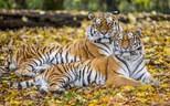 © Tierpark Hellabrunn/ Marc Müller