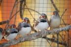 200 Zebrafinken, © Foto: Tierschutzverein München e.V.