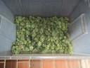 Marihuana-Plantage Wolfratshausen, © Foto: Zollfahndung