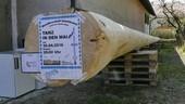 © Das gute Stück - der geklaute Maibaum aus Trudering