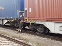 Die Bundespolizei suchte nach weiteren versteckten Migranten in den Containern mit der Hilfe von Spürhunden., © Foto: Bundespolizei