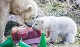 Eisbärin Quintana mit Mama Giovanna, © Foto: Tierpark Hellabrunn/Marc Müller
