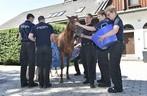 Feuerwehr versorgt ein Pferd, © Branddirektion München