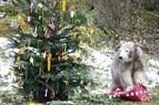 Auch die Tiere in Hellbrunn wollen beschenkt werden, © Foto: Tierpark Hellabrunn / Marc Müller